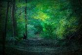 темный лес — Стоковое фото