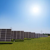 Solar plants in the rows — Stock Photo