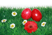 Red Easter eggs in the grass — Stock Photo