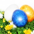 Blue Easter Egg in focus — Stock Photo