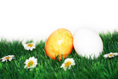 Yellow and white egg — Stock Photo