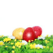 Easter eggs on a flower meadow — Stock Photo
