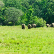 Wild Indian elephants in the nature — Stock Photo #8419057