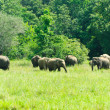 Wild Indian elephants in the nature — Stock Photo #8419071