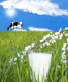 Fresh milk — Стоковое фото