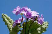 Våren rosa blommor — Stockfoto