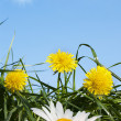 Spring flowers over green grass under the blue sky — Stock Photo