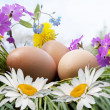 Egg and white camomile — Stock Photo