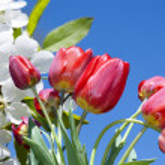 Spring nature background — Stock Photo