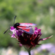 Insect on flower. — Stock Photo #8364737