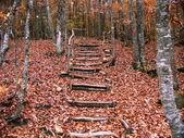 在木材中的行人路. — 图库照片