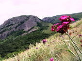 Landscapes of the Crimean mountains. — Stock Photo