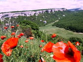 Poppies the Cave city. — Stock Photo