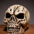 Human Skull With Copyspace - Stock Photo