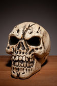 Human Skull With Copyspace — Stock Photo