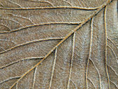 Autumn leaf abstract texture. — Foto Stock