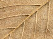 Yellow autumn leaf texture. — Stock Photo