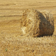 Stock Photo: Stack of hay.