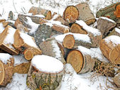 Pile of fire wood. — Stock Photo