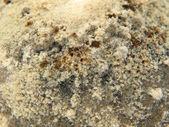 Mold taken closeup. — Stock Photo
