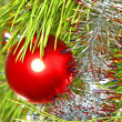 Colorful Red Christmas ball on a pine branch. — Foto de Stock