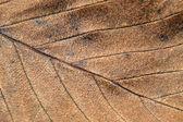 Autumn leaf texture taken closeup. — Стоковое фото
