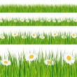 Green grass and daisies strips. — Stockvektor