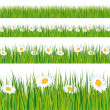 Stock Vector: Green grass and daisies strips.
