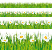 Green grass and daisies strips. — Stok Vektör