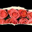 Sheet of paper with roses — Stock Photo