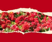 Kağıt çiçekler — Stok fotoğraf
