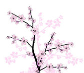 Branch of beautiful cherry blossom — Stock Photo