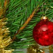 Red glass ball on the Cristmas tree - Stock Photo
