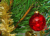 Red glass ball on the Cristmas tree — Stock Photo
