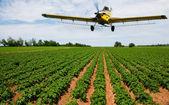 農作物の散布 — ストック写真