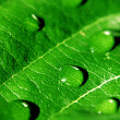 Stock Photo: Drops on leaf