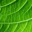 Stock Photo: Green texture