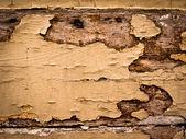 Texture of wood — Stockfoto