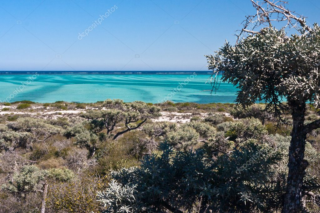 Deciduous vegetation in south-western Madagascar — Stock Photo #9120083