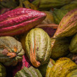 Stock Photo: Cocoa pods