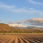 Farmland Panarama — Stock Photo