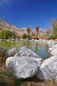 Desert oasis — Stock Photo