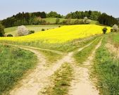 View on field path and yellow rapeseed field — Stock Photo