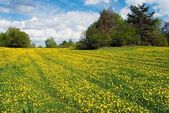 Yellow meadow with rural road and beautiful clouds — Stock Photo