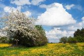 Yellow meadow and sky with beautiful clouds — Stock Photo