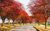 Autumnal view of alley of chokeberry — Stock Photo