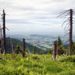 Dead wood on top of knehyne mountain — Stock Photo #9628072
