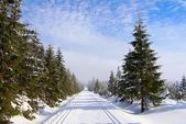 Modified cross country skiing way — Stock Photo