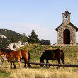 Horses grazing on pasture in front of chapel — Stock Photo #9631725