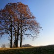 View of autumnal group of lime tree - Photo